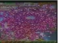虫姫さまふたり ウルトラモード 神業プレイ / シューティングゲーム動画