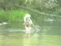川で遊ぶ少女が見つけた予想外な大物