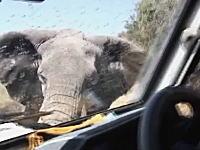 怒った象に襲われた車がフロントガラスを割られる動画。これは怖いなあ