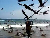 これは怖いwww漁師の魚を空から狙う超大量の鳥たち。盗まれまくりwww