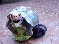 衝撃!亀のペニスはめちゃくちゃグロかった!これはトラウマレベル
