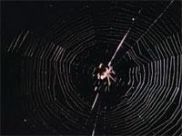 強靭なクモの糸の前では哺乳類であるコウモリも成す術なし