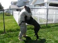 感動の帰宅だけどイヌがでけえ動画。男じゃなかったらハグするのも大変w