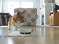 エサをもらえるとうれしさの余り、踊りだす犬