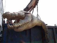 体長6.4メートル、重さ1トンの巨大人食いワニがフィリピンで生け捕りにされる