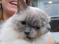 2つの顔を持つ猫が12年という長寿でギネス記録認定
