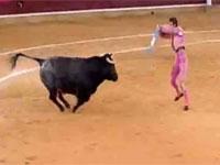 スペインの闘牛でマタドールが牛の角に顔面を貫かれる恐ろしいアクシデント